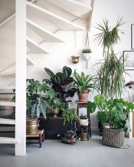 indoor-plant-ideas-under-the-stairs